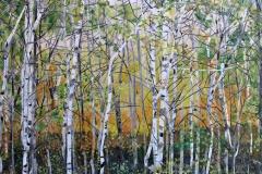 A Grove of Saskatchewan Trees