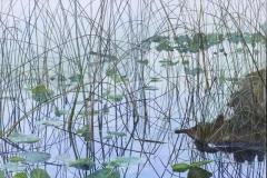 Stowel Lake Reflections