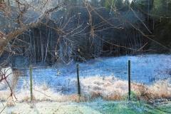 Frost in the Lower Field