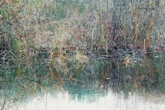 Lake Grasses