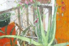 Mexican Aloe Vera