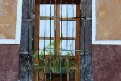 Mexican Window with Plant