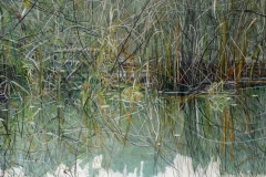 Autumn Grasses in Stowel Lake